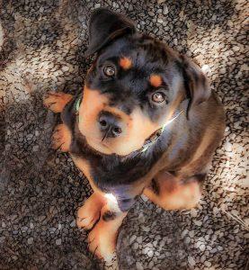 sweet-puppy-277x300